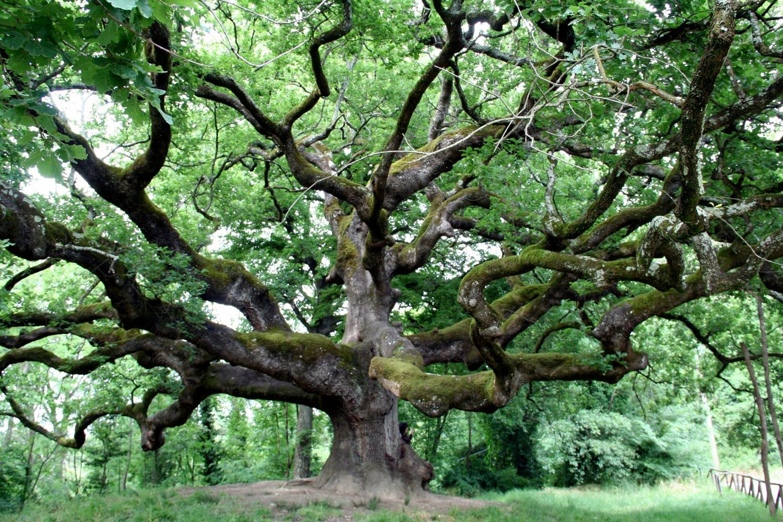 Sulla longevità degli alberi: aspetti teorici e applicativi